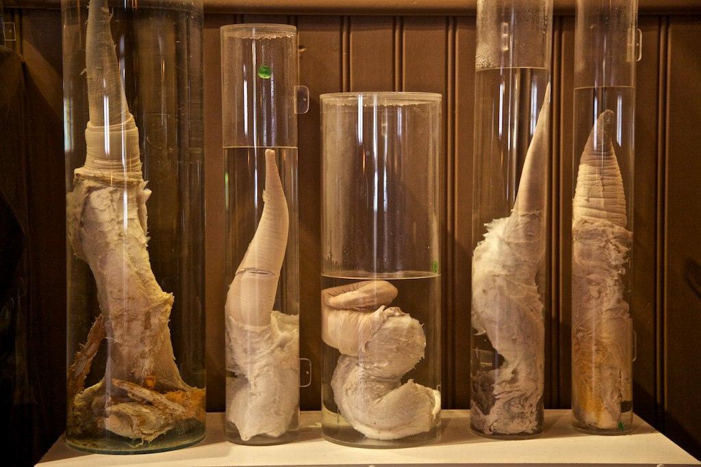 Múzeum penisov